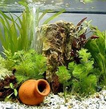 Збір компонентів для акваріума