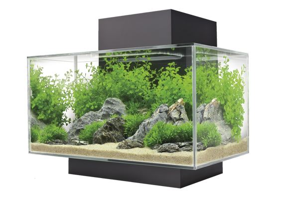 3f1ce47a8f4fbb Акваріумні рибки. Продаж акваріумних рибок. Купити акваріум у Львові