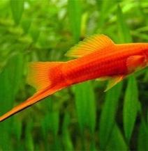 Спеціальний корм для риб