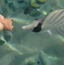 Годування риб